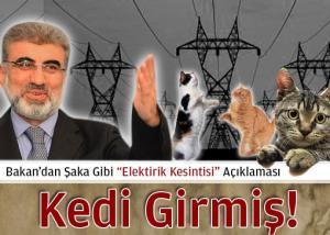 Taner Yildiz le chat est entré